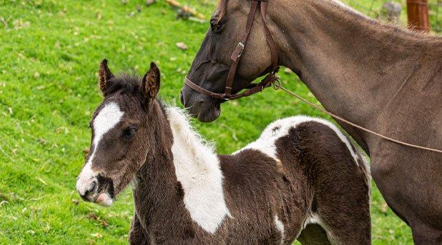 caballos-guatika-min