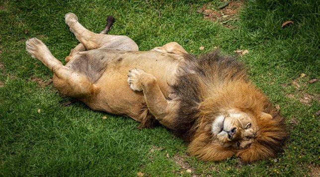 leon-guatika-min