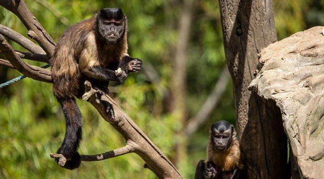 micos-guatika-min