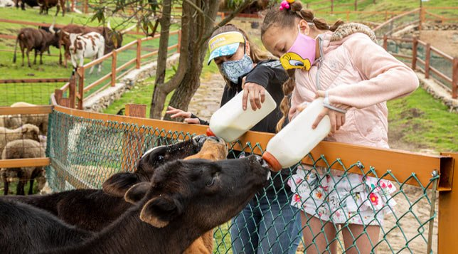 terneros-vacas-guatika-min